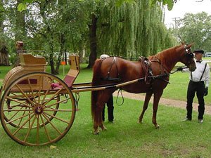 Classic Carriage Buggy in Upper Mississippi in Wisconsin