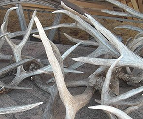 Antlers at Trappers Rendezvous Guest Cabins in Williams, Arizona