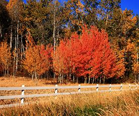 Autumn in Sun Valley Idaho
