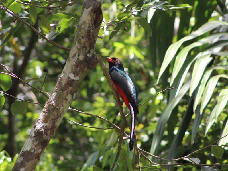 Bird Watching at crimson orchid Inn in Belize