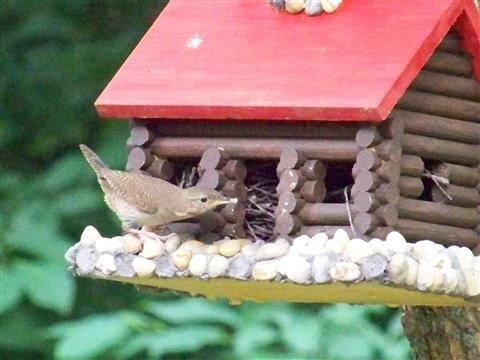 Bird in a bird feeder