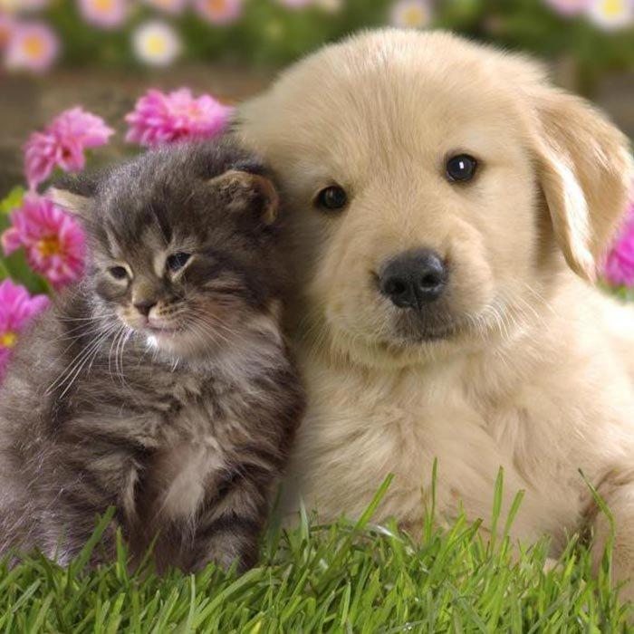 Pet Policy at Tattingstone