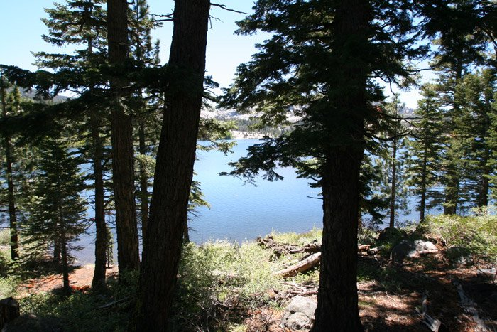 Kit Carson Lodge Spruce