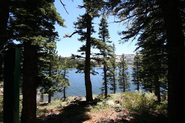 View of a lake through trees