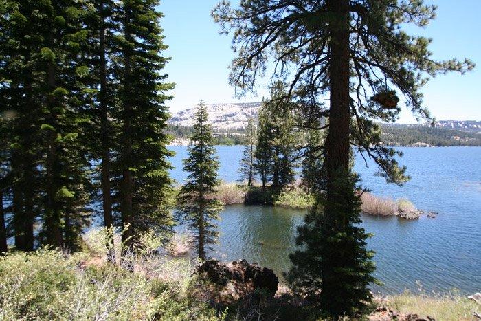A lake seen through a forest