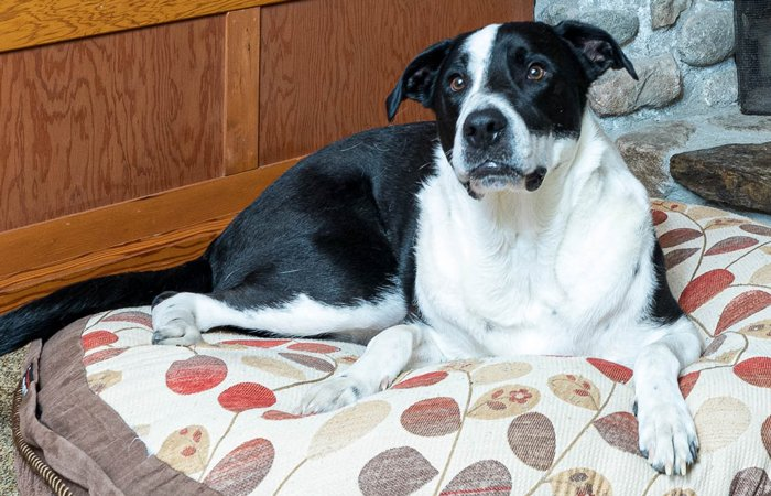 Pet Friendly Rooms at La Conner Country Inn in La Conner, Wa