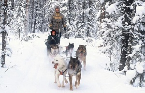 mushing near Inn on the Lake in the Yukon, CA