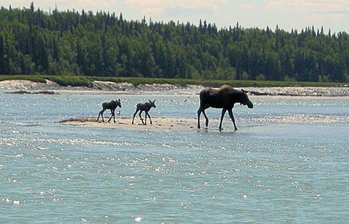Policies at Alaska Riverview Lodge in Kasilof, Alaska