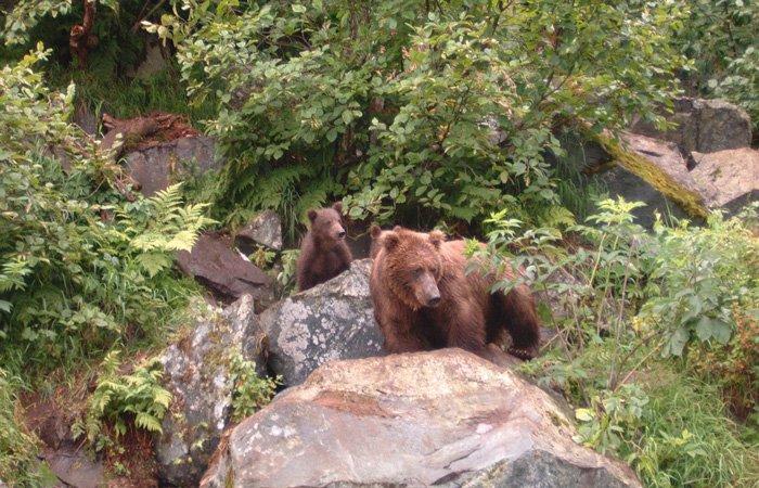 Rates at Alaska Riverview lodge in Kasilof, Alaska