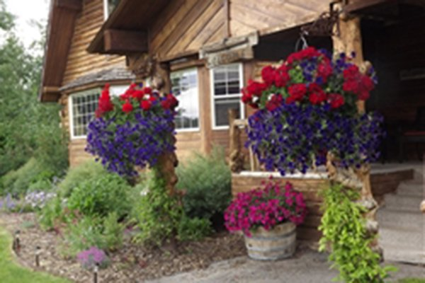 Hanging flowers on a porch overhang