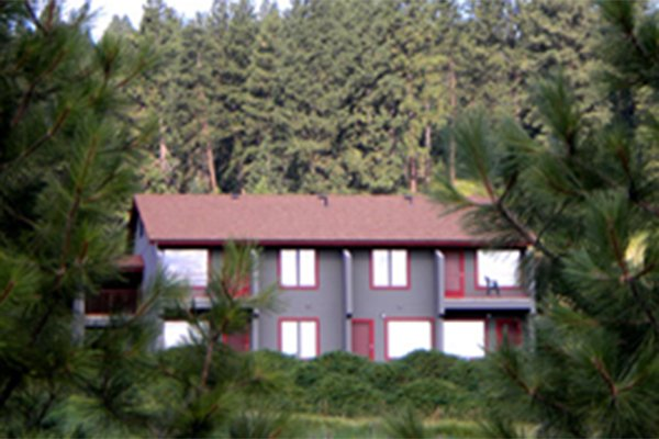 Building hidden away amongst pine trees