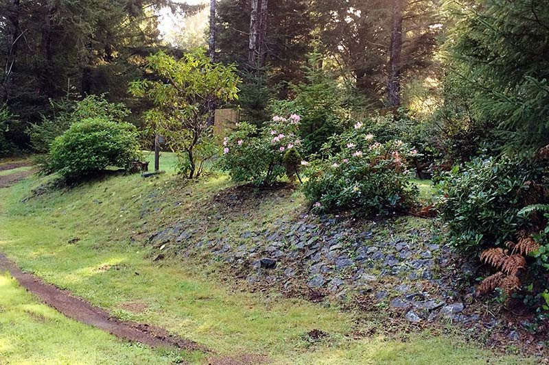 A walking trail near flowering shrubs