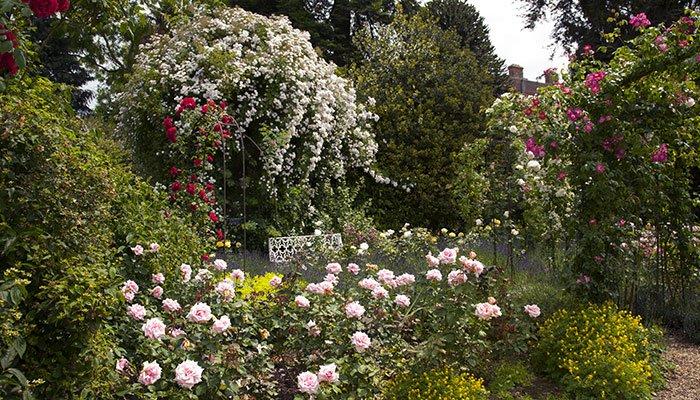 Flowering shrubs and trees