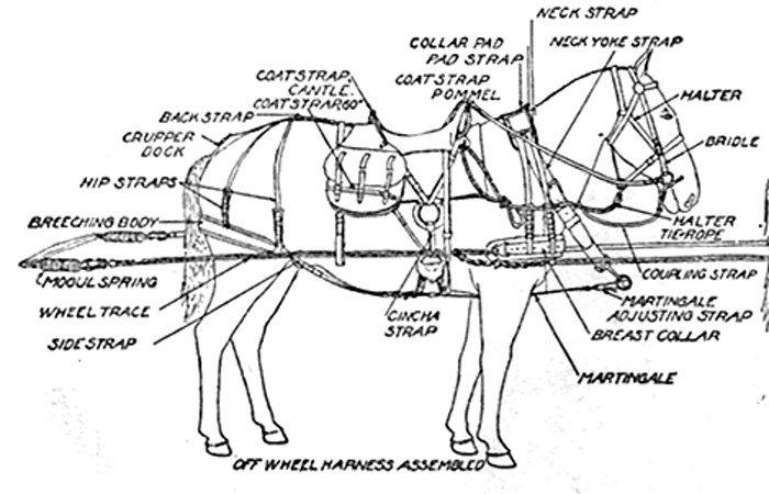 California Historical Artillery Society horse equipment drawing
