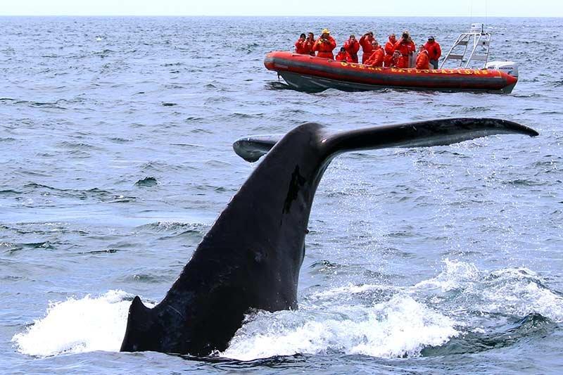 whale watching near Smith's Cove, Nova Scotia