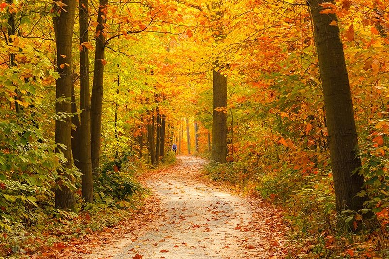 a path surrounded by fall trees
