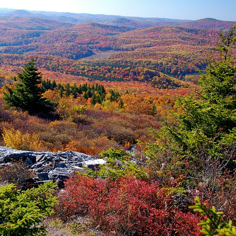 fall foliage across hills