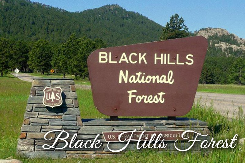 Black Hills National Forest entrance sign