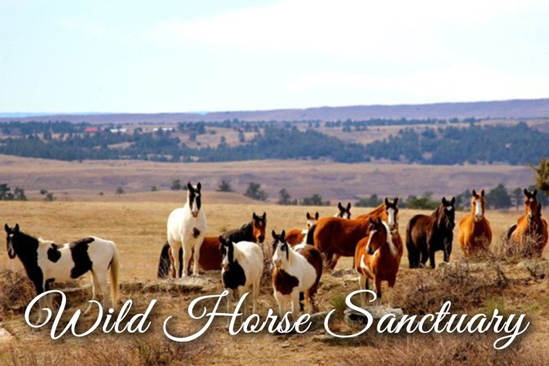wild horses on Wild Horse Sanctuary