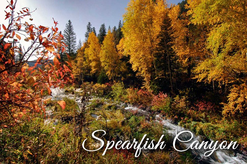 Spearfish Canyon river autumn