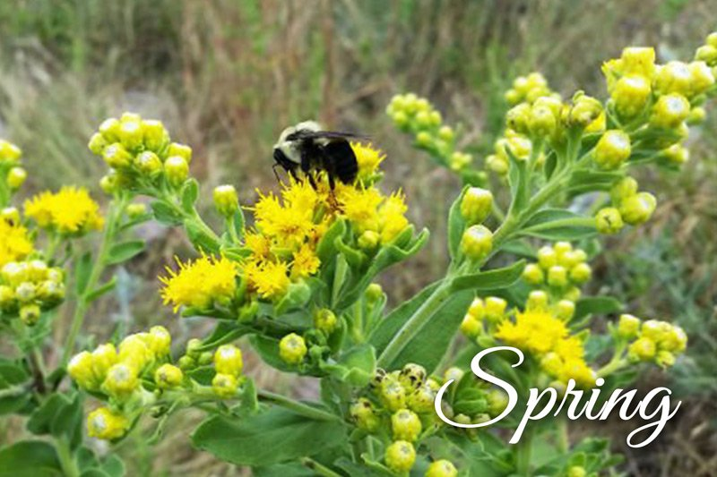 Summer Creek Inn Spring Bumble Bee on yellow flowers
