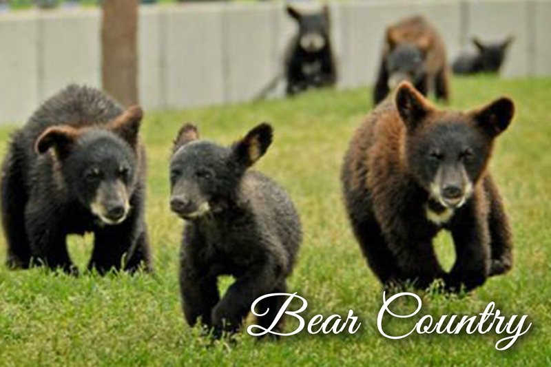 Three running bear cubs