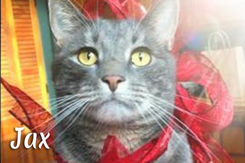 Jax the cat