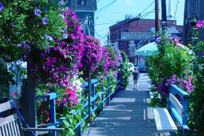 Flowers along wood walkway