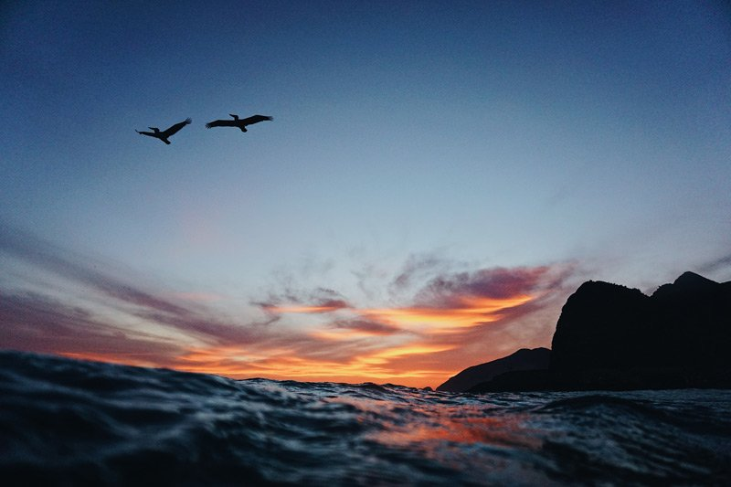 Ocean and seabirds