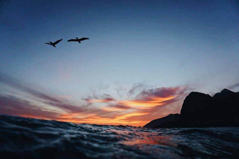 Ocean and seabirds