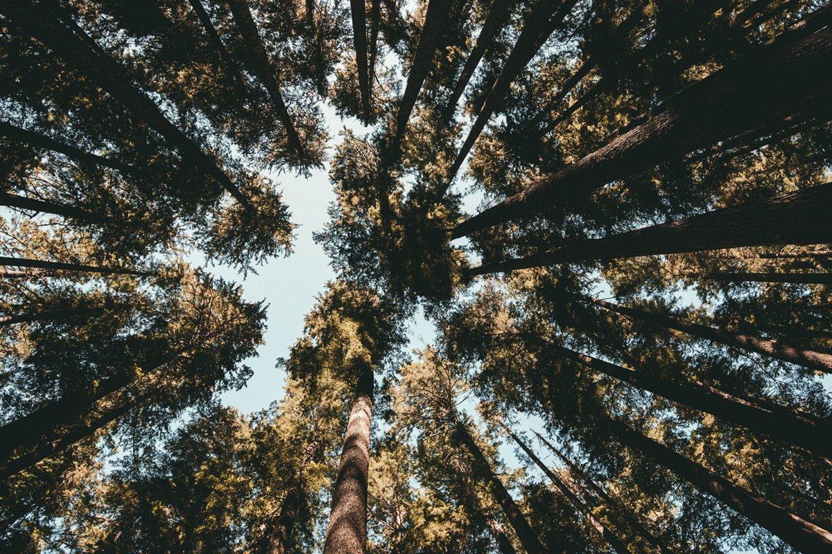 Ontario Inn trees