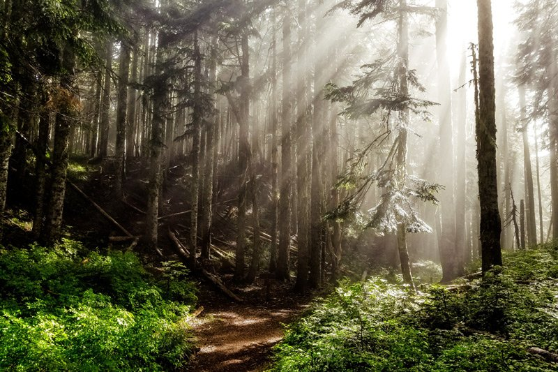 sunrays shining on forest path