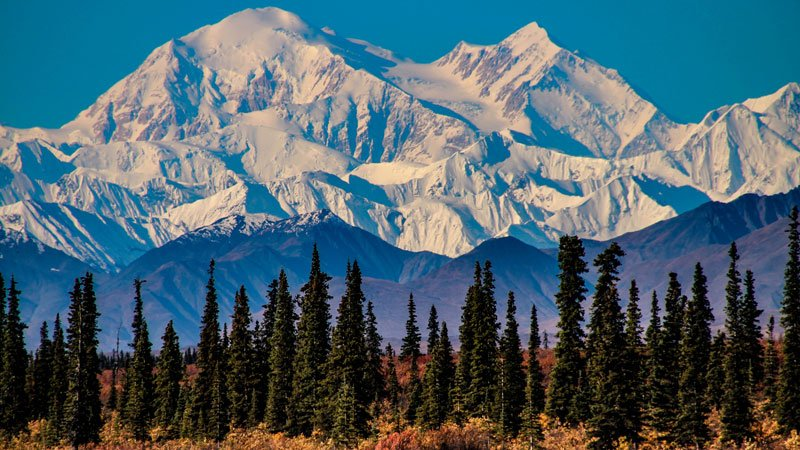 snowy mountains rising above pine forest
