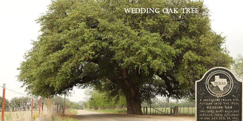City Slide Wedding Oak Tree