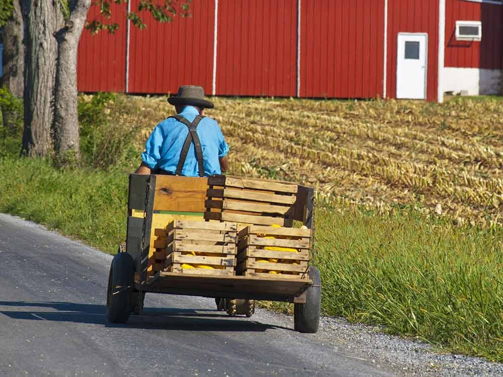 Amish Man with Cart