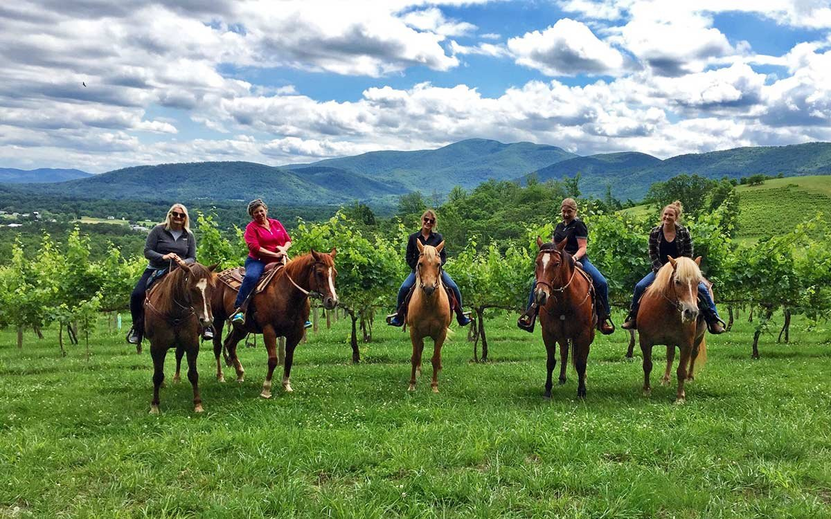 People Riding Horses in Vineyard