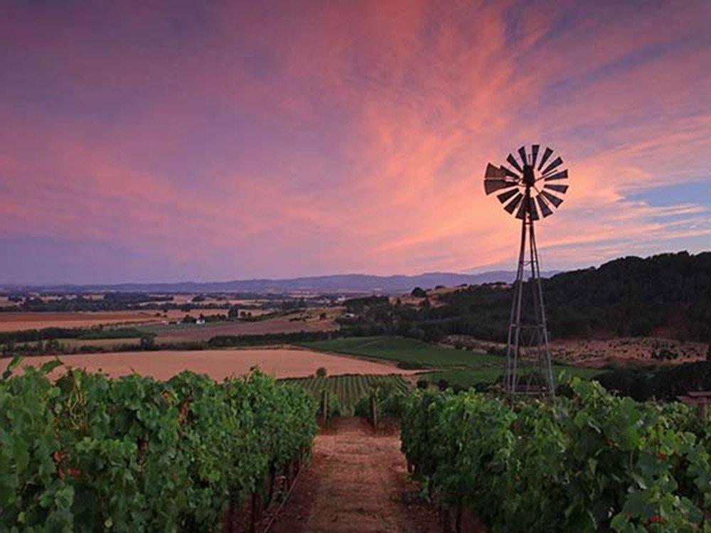 Small windmill in vineyard