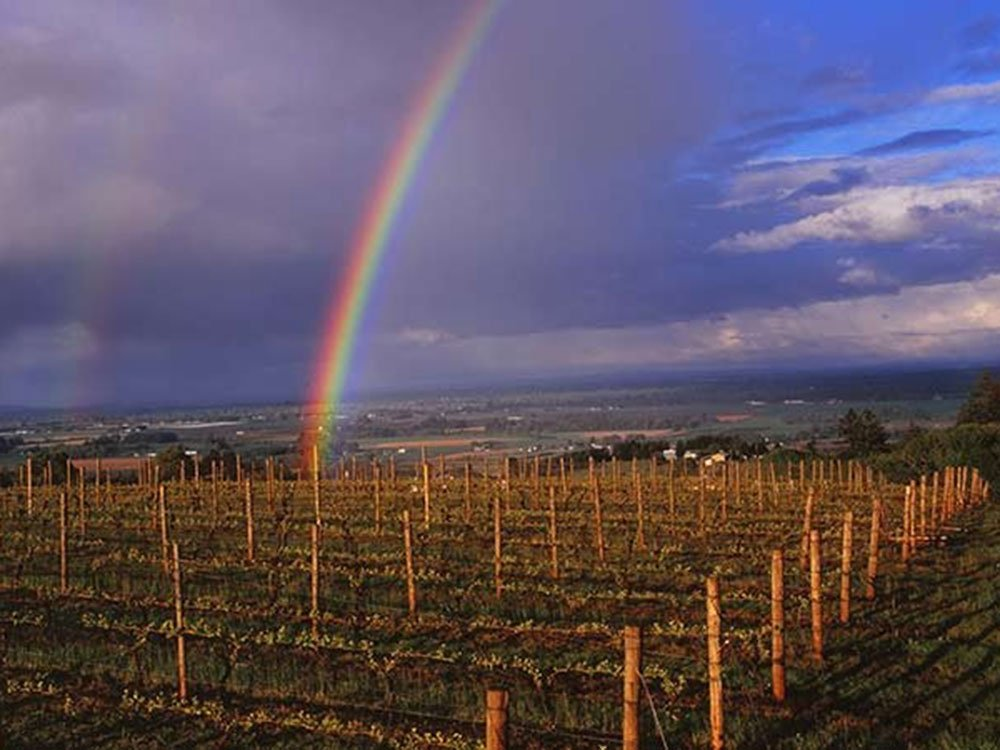 Rainbow above orchard